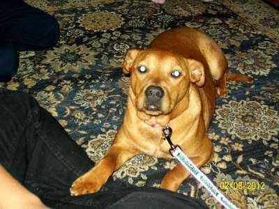 My tail-waggin' dog.